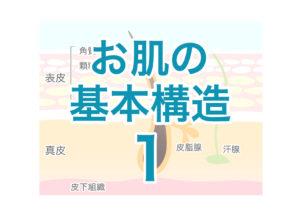 お肌の基本構造1