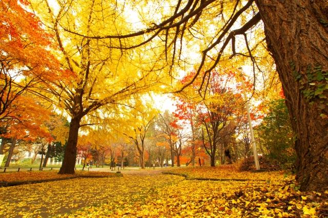 行楽 観光 旅行 秋 紅葉