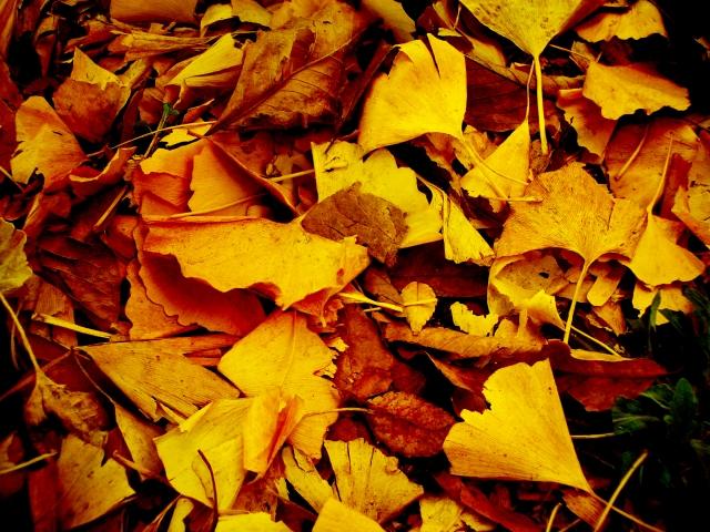 秋 紅葉 朝晩の冷え