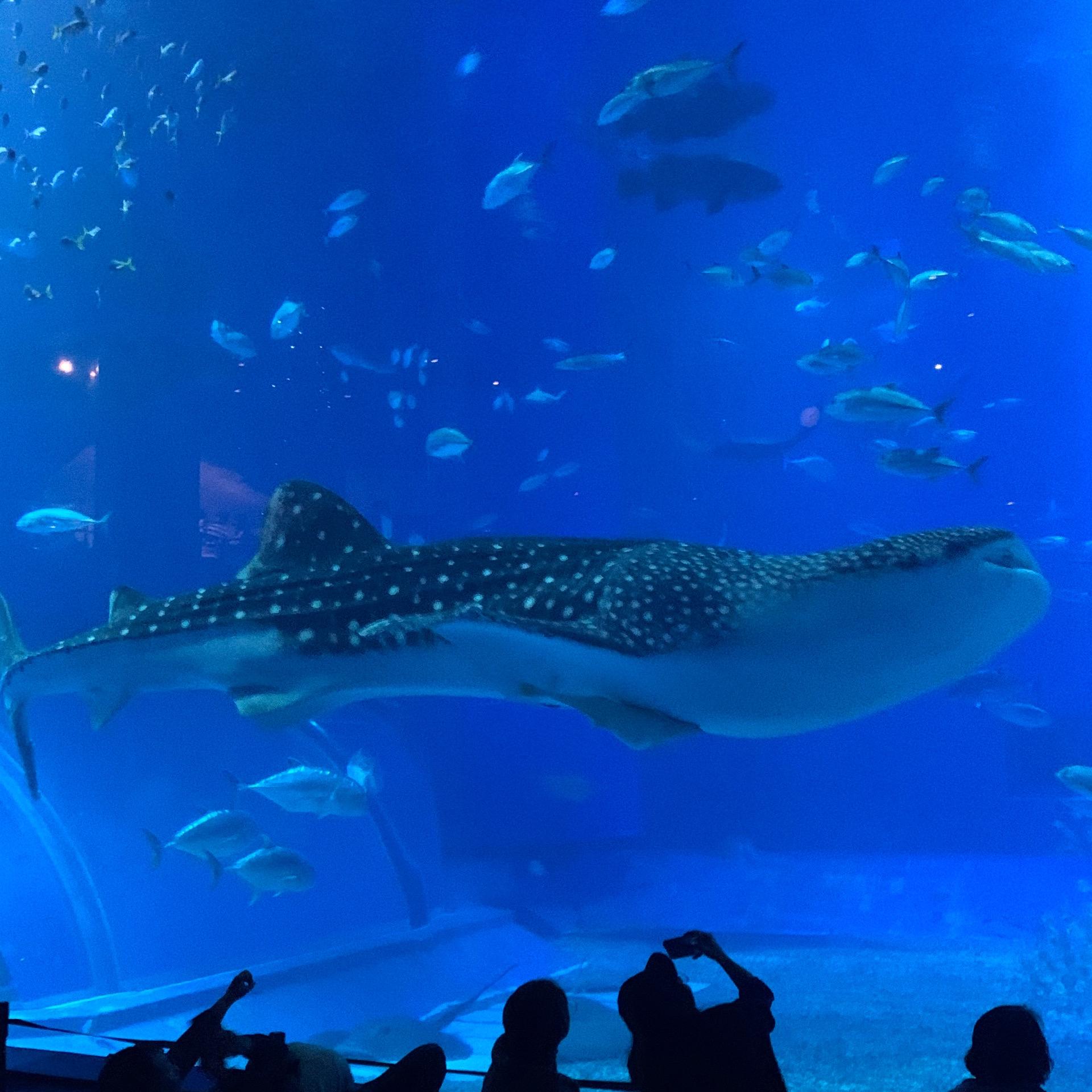 沖縄 ちゅらうみ水族館