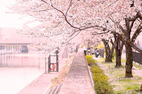 4月  紫外線 春 桜