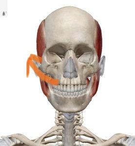 ほうれい線撃退セルフケア 頬骨下ほぐし 頬骨ライン