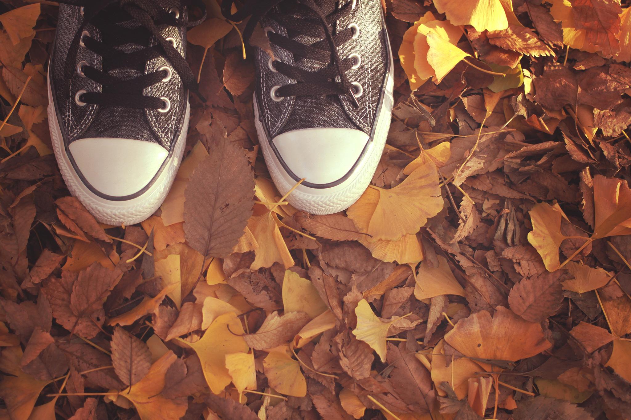 秋のぽか活月間
